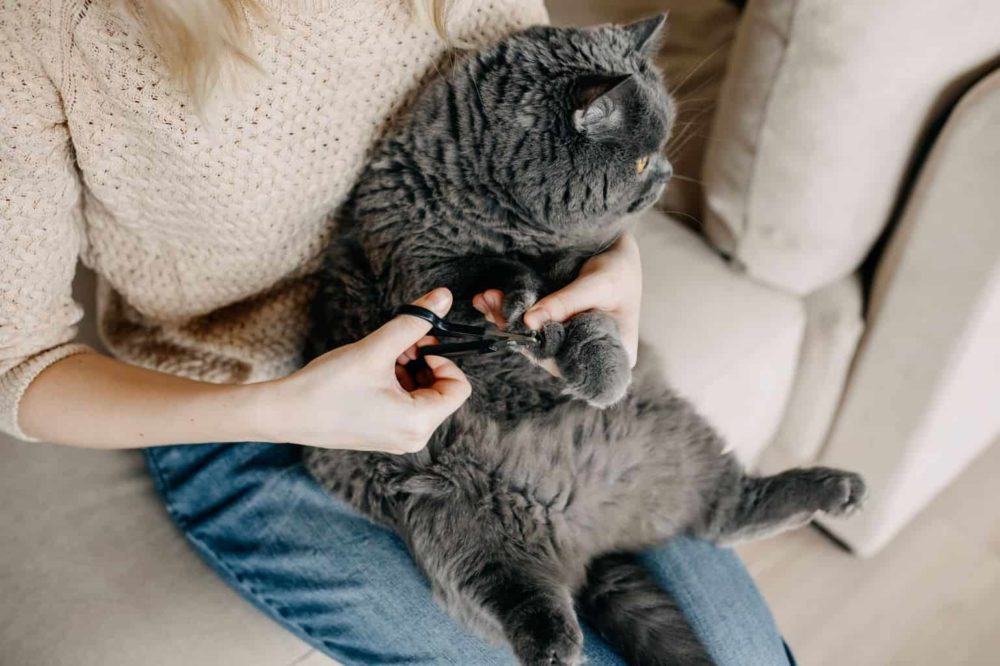 Best Nail Grinder For Cats