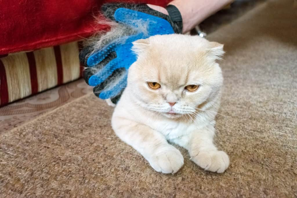 Best Cat Grooming Glove